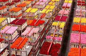 the logistics of Flower Auction Aalsmeer