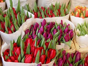 tulips at the flower market Amsterdam